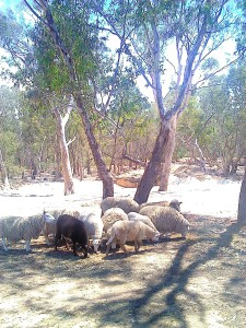 The Mob move in to see how this Dingo Dreaming Landscape has changed